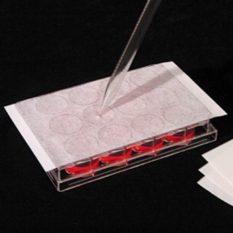 Błona uszczelniająca AeraSeal™ do kultur komórkowych - ze sztucznego jedwabiu